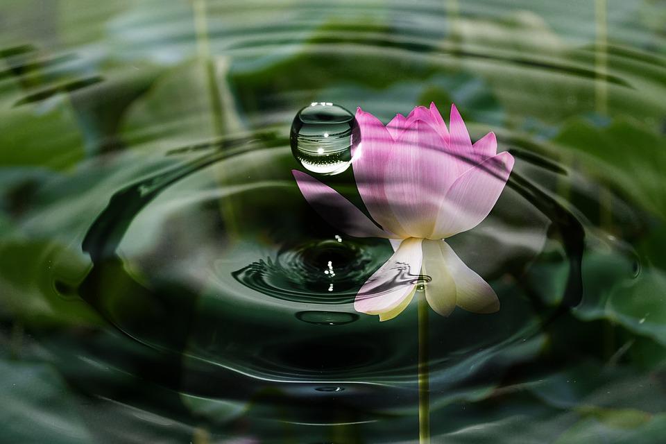 drop-of-water-2092495_960_720