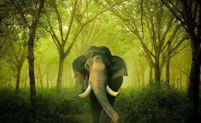 elephant-702307_1280